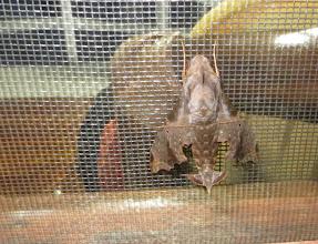 Photo: Giant Moth