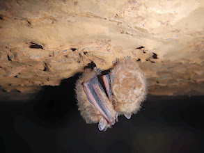 Photo: Bats in Black Forest Shaft