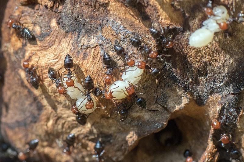 Ants di Andrea Izzotti