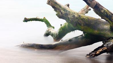 Photo: Me fascinó la forma contorsionada de este tronco de árbol tirado sobre una playa. En muchos sentidos me recuerda partes del cuerpo humano...