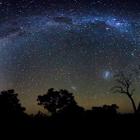 stars panorama by Gill Fry - Landscapes Starscapes ( milkyway, stars, trees, night, gill fry, panorama, milky way, nightscape,  )