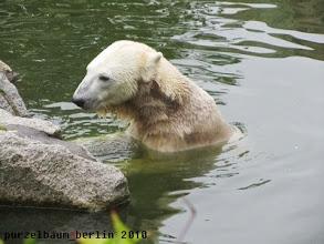 Photo: Hat Knut auf der Insel noch etwas uebersehen ?