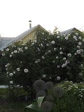 Photo: Schloss Eutin и Bremer Stadtmusikanten (Kordes)