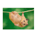 animals photos icon