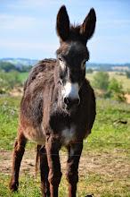 Photo: Quel âne !