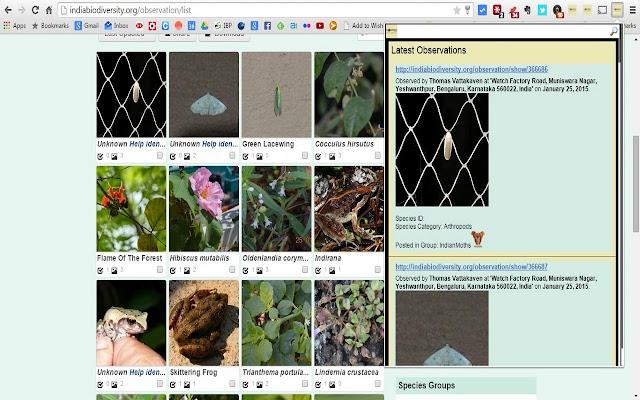 IBP Observation Browser