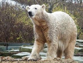 Photo: Knut mustert seine Besucher ;-)