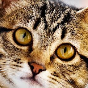 gato 222.jpg