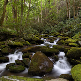Roaring Fork by Tim Devine - Landscapes Waterscapes ( stream, great smoky mountains national park, creek, tennessee, moss, roaring fork motor nature trail, forest, woods, appalachian mountains )