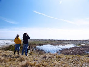 Photo: Observing Canadian Geese in a small freshwater habitat at Carrot Island. Photo by Bill Meserve.