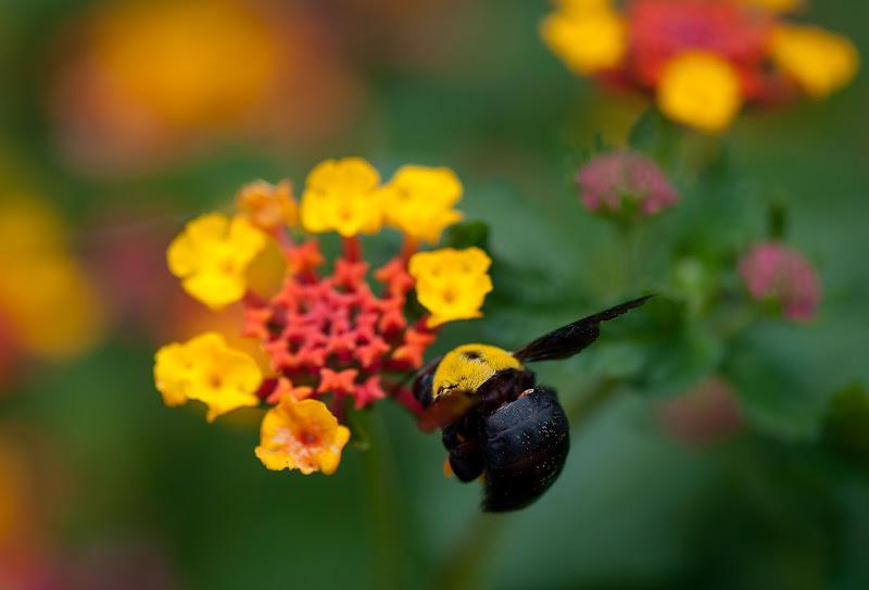Finalmente un fiore! di marikarossiphotography