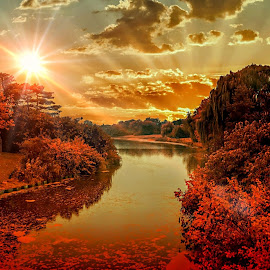 Sunset by Gene Brumer - Landscapes Sunsets & Sunrises ( reflection, sunset, trees, pond, watet, sun )