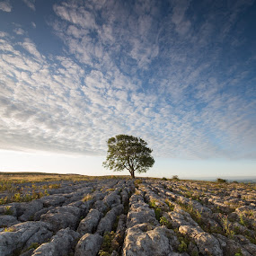 Lone Tree at Sunrise by Andrew Holland - Landscapes Sunsets & Sunrises