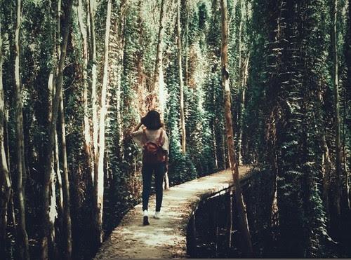 Về làng nổi Tân Lập khám phá rừng tràm 6
