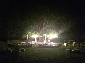 Photo: Old Oak tree all lit up