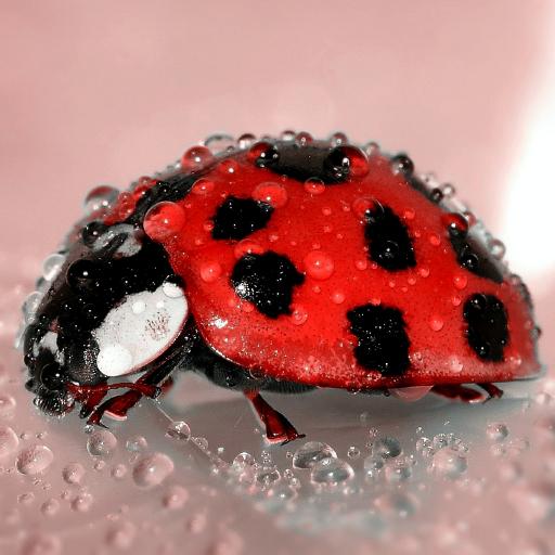 Ladybug Live Wallpaper Aplikacije Na Google Playu