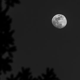 Full Moon by Daniel Fenning - Novices Only Landscapes ( luna, moon, lunar, nightsky, night, goddess )