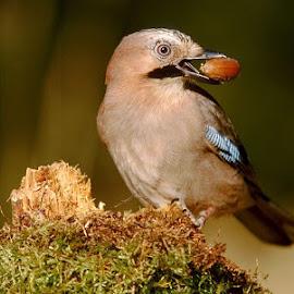 by Saran Kumar - Animals Birds
