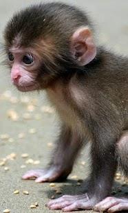 LWP dítě opice - náhled
