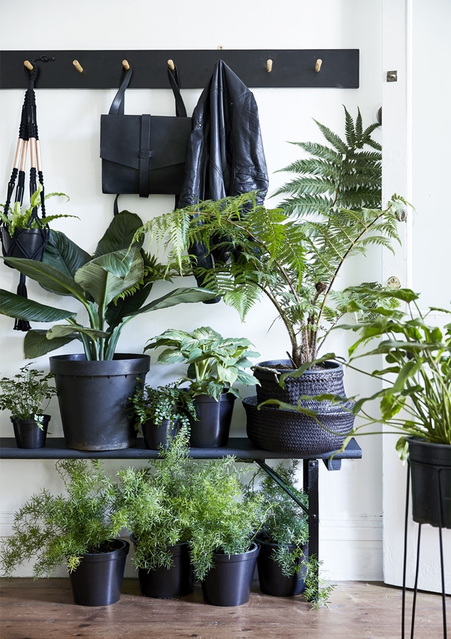 How To Decorate With Plants 7 Stunning Ideas For Indoor Gardens