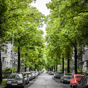 Brno by Lubomir Gobs - City,  Street & Park  Street Scenes ( brno, d700, f1.4d, czech republic, summer, 50mm, nikon )