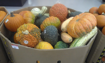 """Photo: Looking for """"something pumpkin-y"""" I had to snap a pic of these funky goards. The Boy and I need to make something with them..hmm.. Suggestions?!!"""
