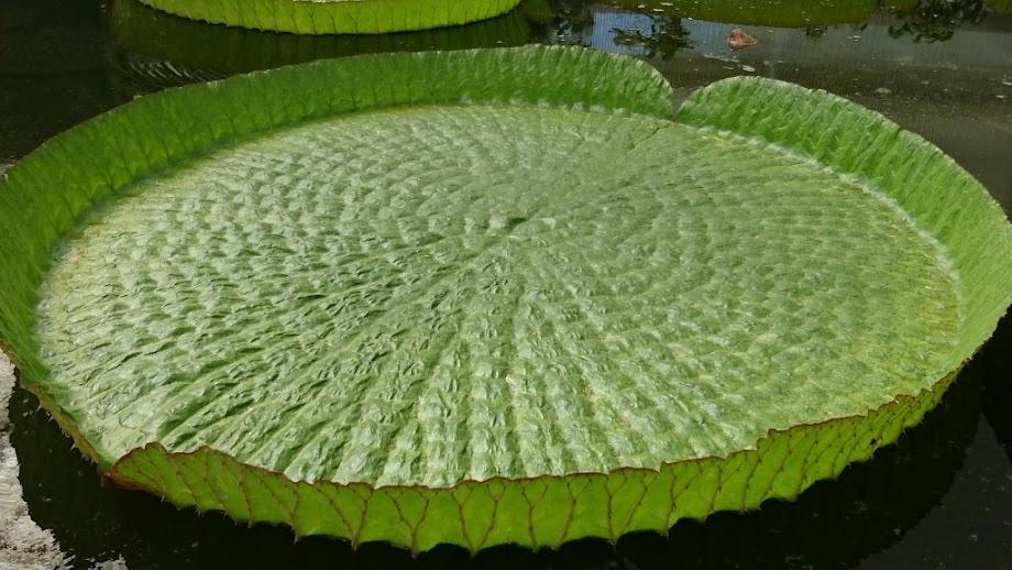 Foto Jardín botánico Fundación Sales 6