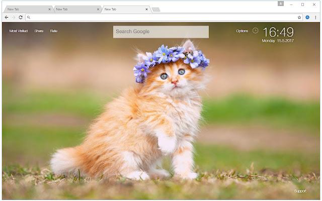 Kittens Puppies Hd Kitten Vs Puppy Themes