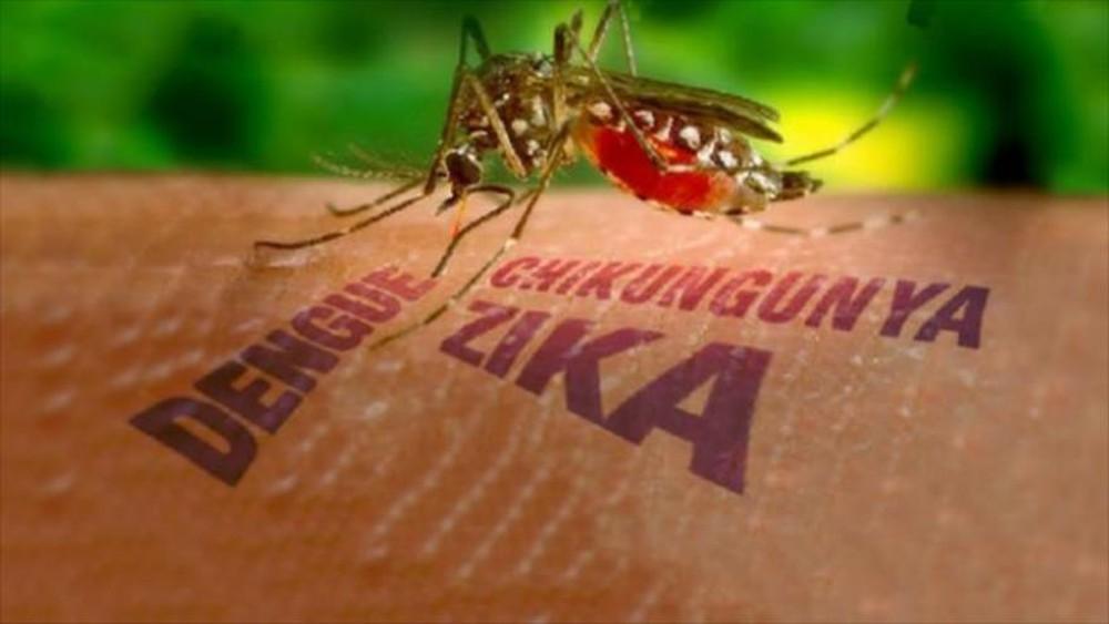 Description: Kết quả hình ảnh cho bệnh do muỗi