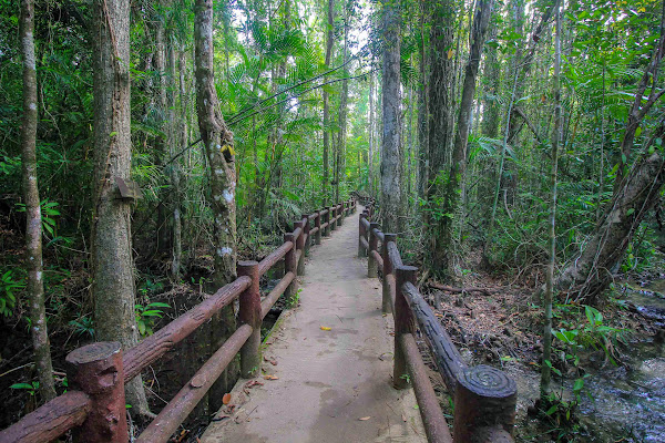 Trek on a jungle trail to Emerald Pool