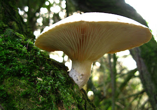 Photo: Fungus on Tree