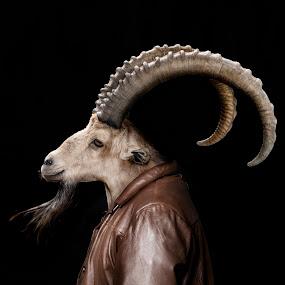 Gerry the Goat by Michal Challa Viljoen - Digital Art Animals ( jacket, zoo, goat, advertising, edit, brown, composite, photography, photoshop, animal,  )