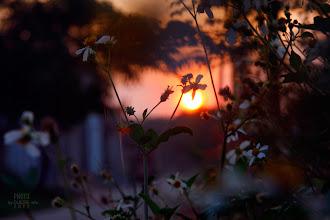 Photo: Hoa dại