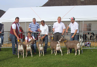 Photo: Klasse 1: 1 jarige toggenburger geiten.  1a. Sarie's Helena JH; 1b. Sarie's Hinke JH; 1c. Marry 108 v.d. Hoogendijk; 1d. Sarie's Hilleke JH; 1e. Sarie's Hilde JH.