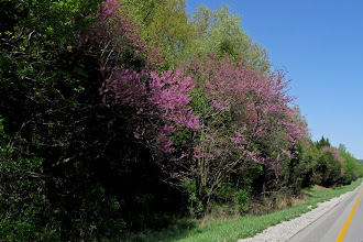 Photo: Mid-April Interstate 65 bright trees