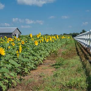 farm_flowers_fences_red.jpg