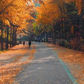 by Stanley P. - City,  Street & Park  City Parks