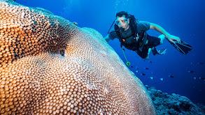 Dirty Oil & Rebuilding Our Reefs thumbnail