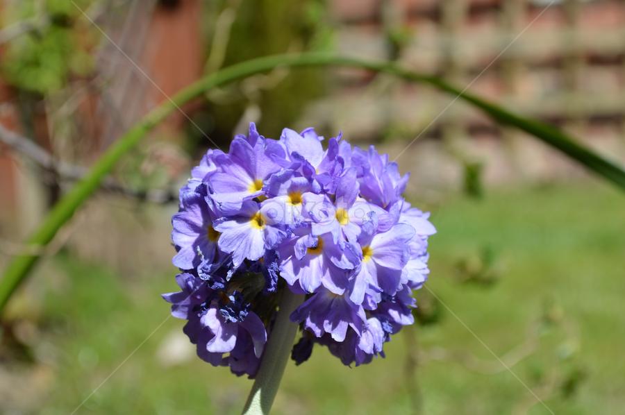 by Iain Weatherley - Flowers Single Flower (  )