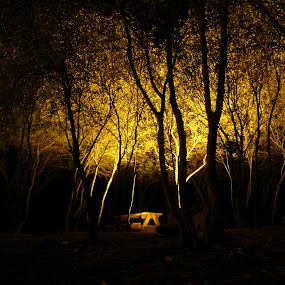engulfing the dark by Kumail Abbas - Landscapes Forests