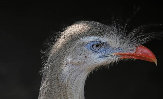 L'uccello aguzzo di emanuela_grandi