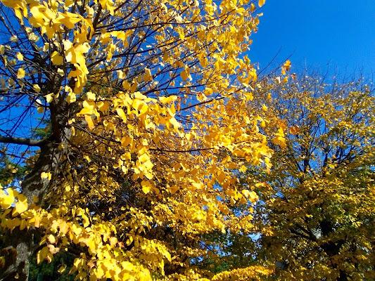 Ottobre giallo di Memole91
