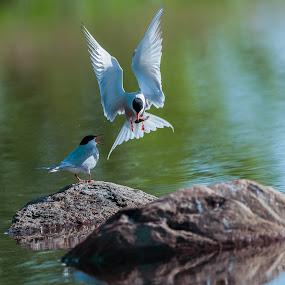 by Mario Guay - Animals Birds ( oiseau )