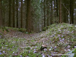 Photo: Lämningar efter konstgången till Stråssa gruva