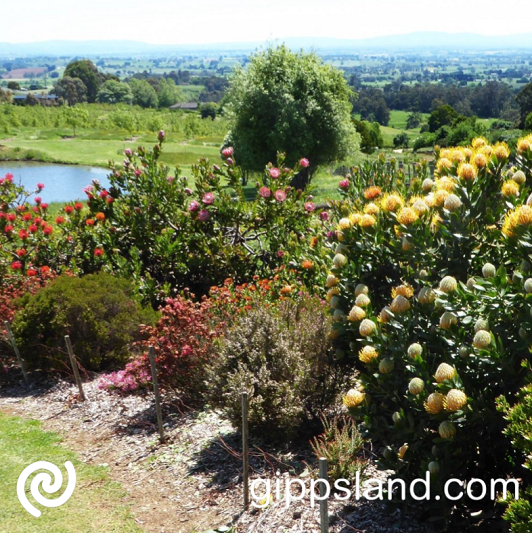Discover the many beautiful gardens in west Gippsland, from those small courtyard types to grand country gardens, join us in the Gardivalia Festival of Gardens