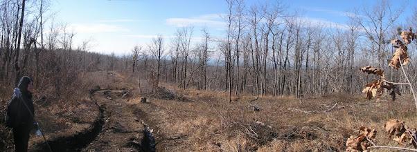 Photo: Лесные вырубки проходят лишь по водоразделам, где есть более-менее свободный доступ к лесным ресурсам.