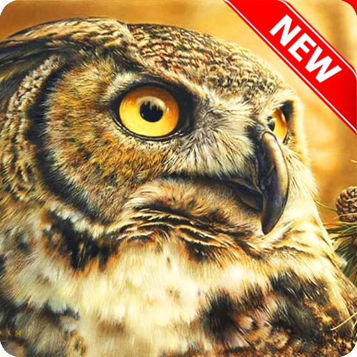 Owl Wallpaper (app)