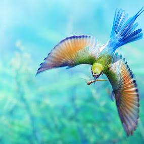 Blue-tailed Bee-eater IIl by Sasi- Smit - Animals Birds