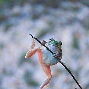 by Nengah Sukastara - Animals Reptiles