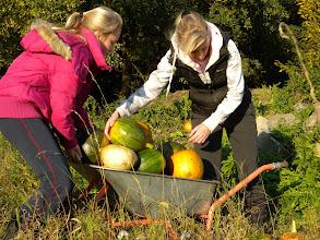 Photo: Ani na dvakrát jsme úrodu z dýňového kopečku neodvezli